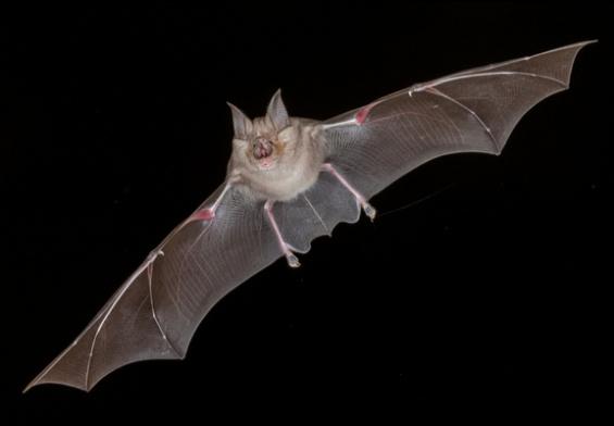 horseshoe bat coronavirus