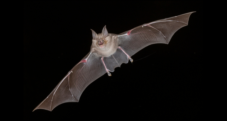 horseshoe bat coronavirus