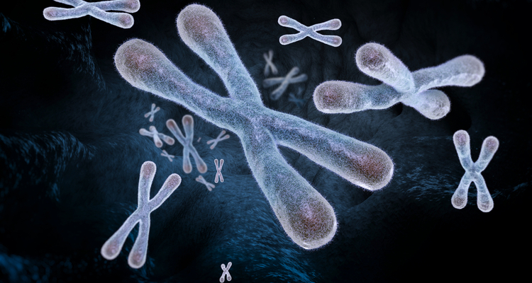 telomere length predicts lifespan